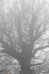 ~ A foggy Sunday ~ (ADAM TAYLOR | Photography) Tags: life trees shadow england blackandwhite bw stilllife white black tree adam english nature weather canon photography eos photo blackwhite oak day shadows natural weekend sunday picture sigma days photograph taylor greatest weekends tones oaktree tone finest natures bwphotography oaktrees facebook blackandwhitephotography blackwhitephotography twitter 450d canoneos450d adamt1991