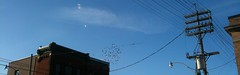 My Photo Stream43 (dnassler) Tags: birds bluesky lookingup wires flockofbirds leslieville lookingoutthewindow viewfromstarbucks queenandlogan