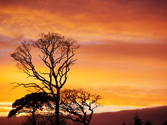 Winter sunset (turgidson) Tags: ireland winter sunset sky tree silhouette studio lens four lumix raw zoom g dramatic x panasonic telephoto developer micro pro wicklow f28 bray dmc thirds converter vario m43 silkypix gh2 35100mm 35100 50club 41442 mirrorless lumixg microfourthirds panasonicgh2 panasoniclumixdmcgh2 silkypixdeveloperstudiopro41442 p1110405 panasonic35100 panasoniclumixgxvario35100mmf28 hhs35100