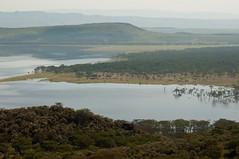 Lake Nakuru, Kenya (tommcshanephotography) Tags: africa travel trees lake nature water tanzania landscapes kenya wildlife safari lakenakuru easternafrica tommcshanephotography