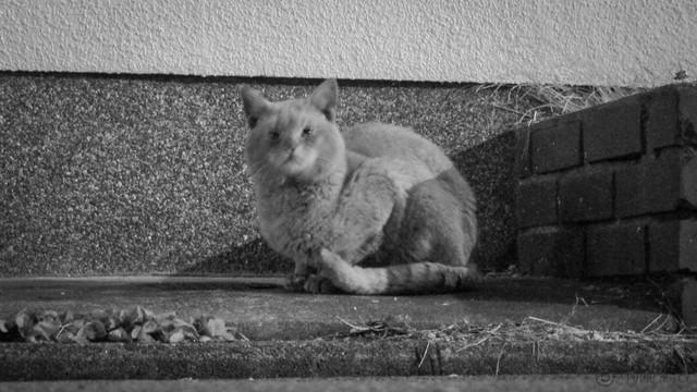 Today's Cat@2013-02-06