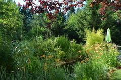 DSC_0977-1 (Chaumurky) Tags: h garden