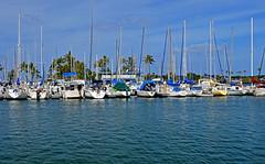 Ala Wai Yacht Harbor (jcc55883) Tags: alawaiyachtharbor harbor boats hawaii alamoanaarea waikiki blue nikon nikond3200 d3200 oahu honolulu
