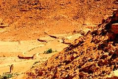 Djerba 2010 146-1 (Elisabeth Gaj) Tags: djerba2010 elisabethgaj tunisia travel landscape natur nature afryka