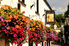 A Pint at the Pub (acwills2014) Tags: beautiful baskets colour color hangingbaskets pub summer quaint chepstow floral village wales monmouthshire depth street