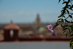 rooftop (tiggerpics2010) Tags: marrakech