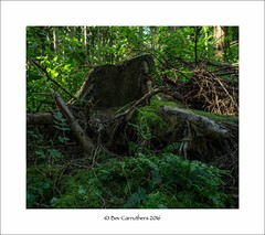 in the wild wood..... (bevscwelsh) Tags: tree moss damp grass trees wood olympus1240 olympusem1