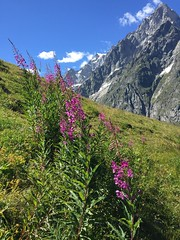 Malatr inferiore, Rifugio Bonatti- Val Ferret (Walking_Photography) Tags: montebianco courmayeur rifugiobonatti malatra trekking valledaosta italy
