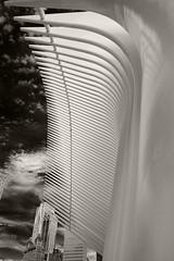 "Up Close, N. Side Of Calatrava ""Oculus"" (sjnnyny) Tags: architectureengineering calatrava pathtransit newworldtradecenter structure monumental oculus lookingup pentaxk3ii abstract stevenj sjnnyny lowermanhattan contemporarybuilding"