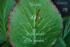 Atoning (Jouni Niirola) Tags: hamashiach yeshua christ jesus red line life peace all yahweh god tree midst garden