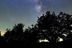 Voie lacte depuis le site de grandchamp (Olivier 38) Tags: night nuit nightscape landscape paysage paysagedenuit trees arbres sky ciel astronomie astronomy astrophotography astrophotographie