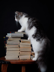 Niko (rampx) Tags: cat neko miaw niko books manga studio lighting pentax 645z