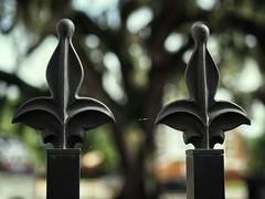 Tree Bokeh - HFF (TuthFaree) Tags: elements tree bokeh dof closeup fence fencefriday hff fl florida