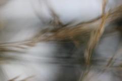 leise (borchert.regina) Tags: natur unschrfe sthetik poesie