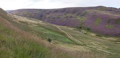 Doctor's Gate path (Blue Pelican) Tags: glossop derbyshire doctorsgate path romanroad heather august