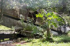 Gatorland-0731.jpg