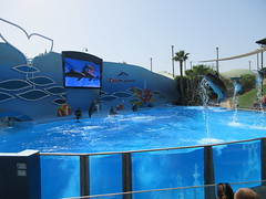 IMG_0969 (L.Karnas) Tags: algarve summer september 2016 portugal albufeira sommer zoomarine dolphin dolphins