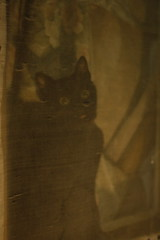 Mephistopheles - The Cat (Laila Gebhard) Tags: cat animal black witch spooky halloween old haunted
