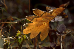 Llegando el otoo (cmateosdeporras) Tags: campo seco otoo hojas leaves autumn nikond5200