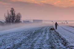 Walking the doggies (KennethVerburg.nl) Tags: morning winter dog mist snow cold netherlands dutch sunrise landscape sneeuw nederland hond flevoland 2012 landschap almere gooimeer almerehaven gooimeerdijk