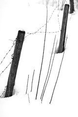 unnamed with lots of snow (tom_focus) Tags: wood schnee winter bw snow fence sticks zaun barbwire stacheldraht