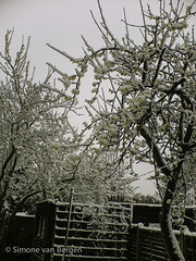 """Snow Tree • <a style=""""font-size:0.8em;"""" href=""""http://www.flickr.com/photos/44019124@N04/8278349406/"""" target=""""_blank"""">View on Flickr</a>"""