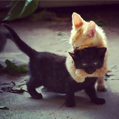 Cats hug .. (Asheq Alenizi) Tags: cats cute love animals cat hug uploaded:by=instagram