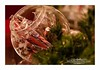 An Old Fashioned Christmas (Michelle Quinn Studios) Tags: christmas vintage evergreen candyjar stickcandy