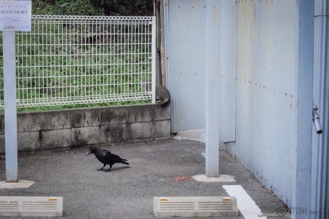 Today's Cat@2012-012-21
