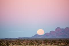 Kata Tjula (john white photos) Tags: red sky moon rock dawn bush sand sandstone desert flat central australia remote setting northernterritory theolgas katatjula