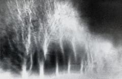 Broken Trees(B/W) (kenny barker) Tags: longexposure trees winter monochrome landscape scotland icm scottishlandscape landscapeuk panasonicg1 kennybarker