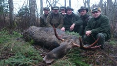 "Moose Hunting In Estonia • <a style=""font-size:0.8em;"" href=""https://www.flickr.com/photos/61427906@N06/8302554517/"" target=""_blank"">View on Flickr</a>"
