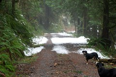 Hurry up! (Thaddz) Tags: dog snow puppy cascades northcascades entlebucher entlebuchermountaindog