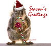 Happy Holidays! (Peggy Collins) Tags: christmas canada squirrel squirrels britishcolumbia candycane happyholidays merrychristmas santahat sunshinecoast seasonsgreetings christmasbow peggycollins christmasanimal christmassquirrel