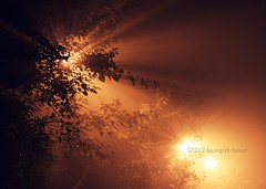 Light upon light (mospel) Tags: trees light shadow mist fog night flickr explore lahore lums
