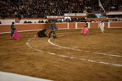 Provincia Juriquilla_2011 - 11 (Eduardo de la Garma de la Rosa) Tags: canon toros corrida lida bestia 2011 rejoneador pablohermosodemendoza eduardodelagarma mamonet