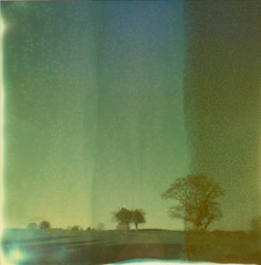 Dream (kittacabe) Tags: ireland winter tree slr film project landscape polaroid shade instant 680 impossible solor px680
