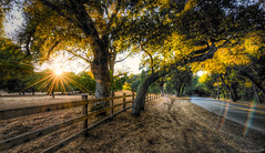 the gilded light becomes you (elmofoto) Tags: california road trees sunset field northerncalifornia fence landscape rainbow bend fav50 lensflare sunburst woodside hdr 500v gettyimages portolavalley goldenlight naturescape 1000v fav25