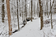 Trail Bridge (Fishit) Tags: bridge trees snow ice forest woodlands trails ash cnc winterstorm hikingsnow morninghike cincinnatinaturecenter rowewoods