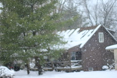 let it snow (Emily Caitlin.) Tags: birthday winter snow cold nature canon bokeh 17 50mmf14 sooc t2i happynewyearseve