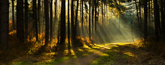 Rays of Light in Sherwood Forest (DaveKav) Tags: wood morning trees light tree forest woodland path olympus illuminated explore sherwoodforest robinhood nottinghamshire streaming lightbeams illuminate lightrays raysoflight sherwood e510 explored a614