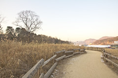 Winter road (Carl_W) Tags: travel nature canon eos korea seoul winterroad namiisland canoneos550d eos550d