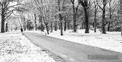 POTD 21 January 2013: Woodbank Park in the Snow (Ian M Butterfield) Tags: park uk greatbritain trees winter england people urban plants snow plant tree english weather season manchester four europe nw track european cheshire northwest unitedkingdom britain snowy path 4 tracks parks eu potd walkway stockport gb british walkways paths persons footpath count greatermanchester northwestengland woodbankpark footpaths nwengland