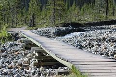 A few of the bridges along the trail (davebloggs007) Tags: bridges yoho national park
