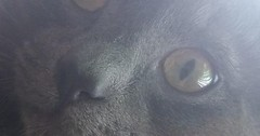 Said my cats name so I could take a picture via http://ift.tt/29KELz0 (dozhub) Tags: cat kitty kitten cute funny aww adorable cats