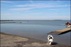 West Kirby Wirral 230816 (5) (Liz Callan) Tags: westkirby wirral sea seaside beach rocks boats ben bordercollie dogs sky water waves buildings lizcallan lizcallanphotography