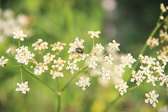 Summertime (Dmitry Stebnev) Tags: summer june nature landscape flowers grass sun heat air russia moscow wind weather light canon eos 650d bokeh plant outdoor field fly green