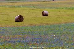 Castelluccio di Norcia (fcentur71) Tags: campi fioriti norcia umbria italia it