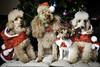 Birra (valleyman80) Tags: birra jack russell dog pet pets cane cucciolo cucciola cagnolina amica simpatia