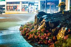 sidewalk soak (kevin.boyd) Tags: nightphotography night dark sprinkler garden landscaping